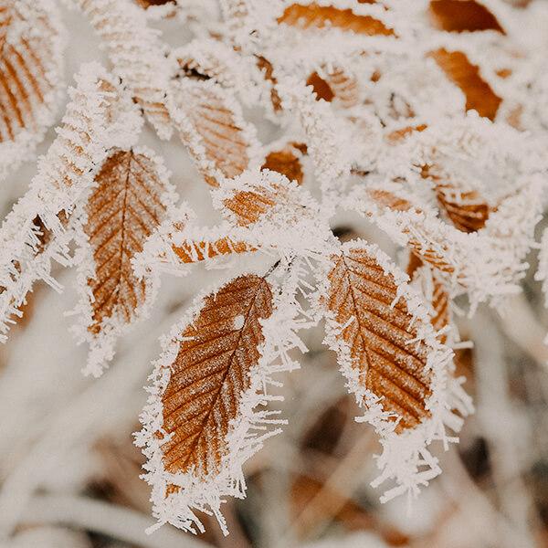 Winter protect your skin Atto Primo